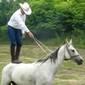 Bábolnai arab lovak a tornaljai Terpák farmról