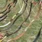 Szabad íjászat tapasztalatcserével a runyai szőlőben