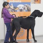 Kutyakiállítás Pozsonyban - Springduodanube CACIB