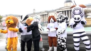 WORLD ANIMAL DAY OFFICIAL FILM 2015