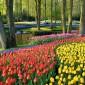 A világ legnagyobb virágoskertje