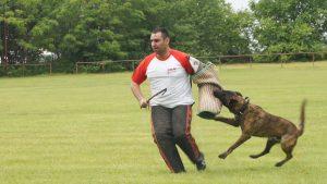 kutyaoktatás Bélvatán