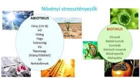 A növényi stressz tünetei és védekezési mechanizmusai