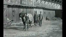 Ilyen volt egykor a ligetfalui lovi