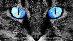 Ma van a macskák világnapja