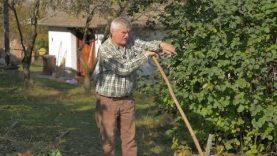 Ember- és környezetkímélő kertművelés 2.